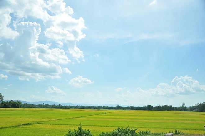 Linh Son mat an mat ngu truoc khi di phuot hinh anh 1 Những cánh đồng lúa thơm ngát tại những miền quê.