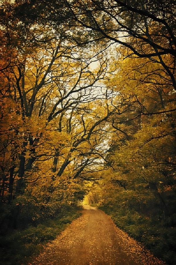 Nhung cung duong dep nhu tranh ve hinh anh 3 Con đường mùa thu vàng quyến rũ ở Kałuszyn, Ba Lan.