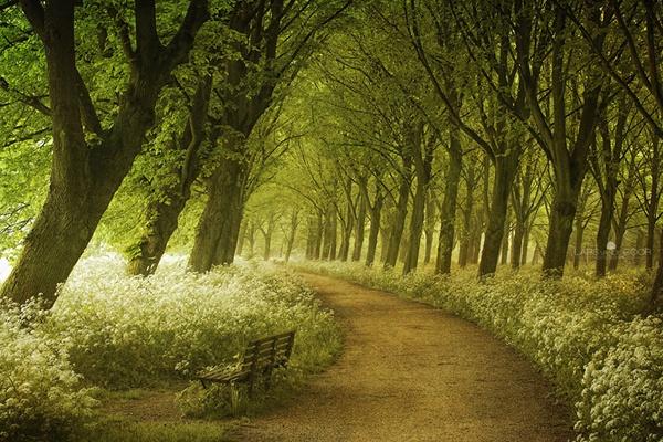 Nhung cung duong dep nhu tranh ve hinh anh 6   Đường hoa dại vào mùa xuân ở Hà Lan.