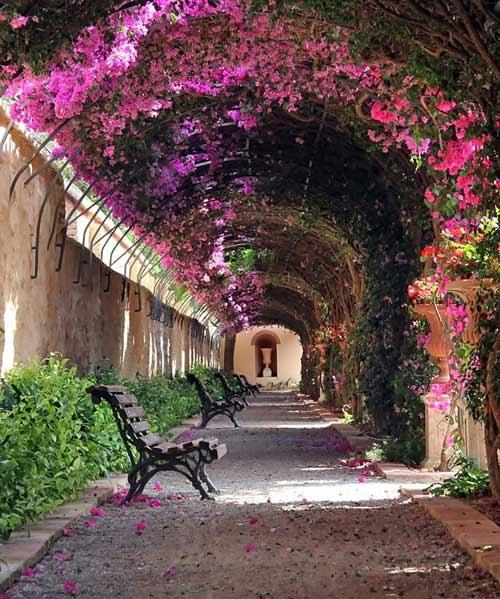 Nhung cung duong dep nhu tranh ve hinh anh 7  Con đường hoa giấy ở Valencia, Tây Ban Nha.