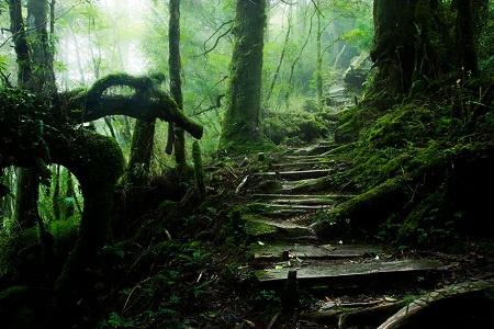 Nhung cung duong dep nhu tranh ve hinh anh 8   Đường mòn trên núi Thái Bình - Đài Loan.