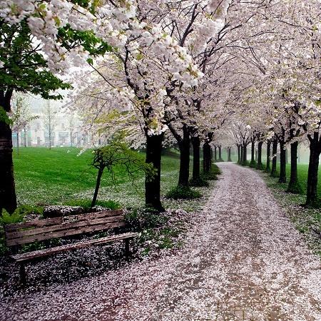 Nhung cung duong dep nhu tranh ve hinh anh 10 Con đường mùa xuân ở công viên Spencer Smith, thành phố Burlington, tỉnh Ontario, Canada.
