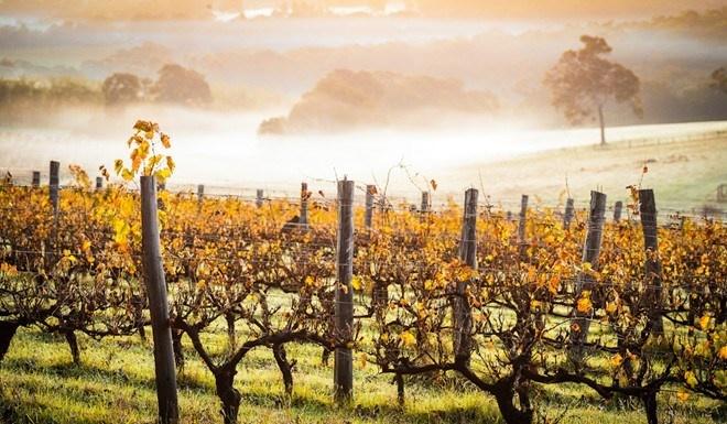 Nhung cung duong dep nhu tranh ve hinh anh 11 Từ Perth tới Albany (Australia): Tuyến đường tuyệt đẹp này đi qua nhiều vùng biển xanh biếc, khu trồng rượu nho và các điểm tham quan lịch sử.