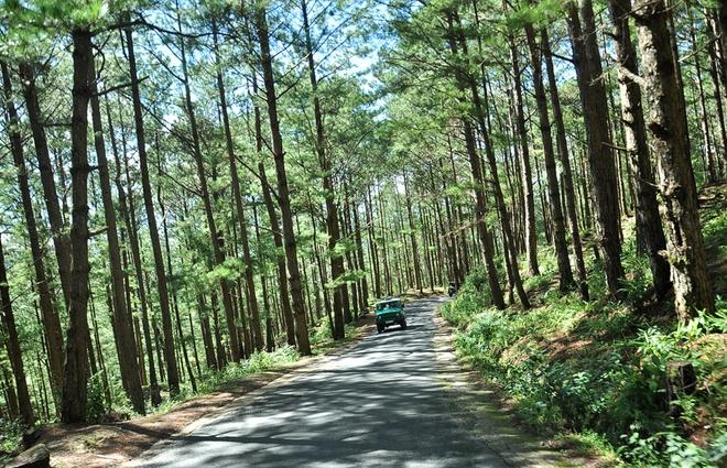 Say men ruou can, chenh choang Da Lat hinh anh 4 Con đường lên Lang Biang thơ mộng giữa đồi thông.