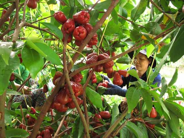 5 diem du ngoan thu vi khi den Tien Giang hinh anh 3 Khu du lịch sinh thái Miệt vườn Cái Bè. Ảnh: Canthotv.vn.