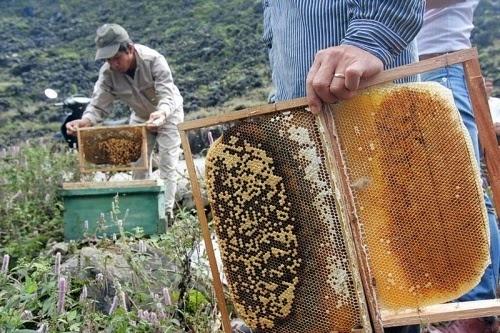 Thuong thuc dac san Ha Giang mua tam giac mach hinh anh 3 Mật ong bạc hà được chế biến thủ công và tỉ mẩn. Ảnh: Hagiangonline.net.