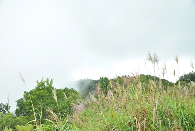Lac vao coi tien tren dinh Bach Ma hinh anh 2 Con đường từ quốc lộ 1A dẫn vào Vườn quốc gia Bạch Mã được bao phủ bởi rừng cây xanh mát dọc suốt 2 lối đi. Không khí trở nên trong lành, mát và dịu khác hẳn với thời tiết oi nồng khi đi trên quốc lộ lớn. Dừng chân ở dưới chân núi Bạch Mã, bạn sẽ được các nhân viên ở đây hướng dẫn rất tận tình.