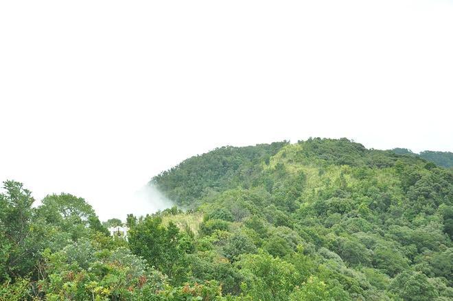 Lac vao coi tien tren dinh Bach Ma hinh anh 6 Đỉnh Bạch Mã cao nhất trong dãy Bạch Mã có độ cao khoảng 1.450m. Nơi đây có Hải Vọng Đài là điểm bạn có thể quan sát toàn bộ khung cảnh bên dưới với vịnh Lăng Cô phía xa xa, núi non trùng điệp hay dòng sông uốn lượn... Những ngày tháng 9, tiết trời rất đẹp bạn sẽ trầm trồ khi được ngắm mây vờn trên những đỉnh núi tạo nên vẻ đẹp tựa chốn bồng lai tiên cảnh. Những đám mây trắng khi thì lững lờ, lúc lại trôi rất nhanh. Có những lúc, mây phủ kín những dãy núi tạo thành không gian trắng xóa, mờ ảo. Có những khi mây chỉ lướt nhẹ theo đám nhỏ lấp ló những cánh rừng màu xanh tươi sự sống.