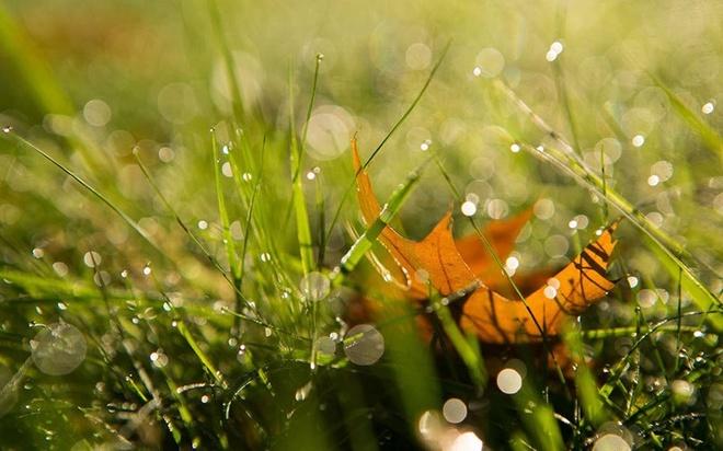 Cuoi thu, di dau de huong tron nhung ngay hanh hao nang? hinh anh 2 Đến Sapa vào cuối mùa thu, những áng vàng của cánh đồng lúa chín vẫn thấp thoáng trong mây, ngắm nhìn buổi chiều nhạt nắng buông xõa trên các bản làng, và những con suối chảy róc rách dưới những tán lá vàng sẽ mang lại cho bạn một cảm giác bình yên tuyệt đối. Ảnh: Cao Phong Vu.