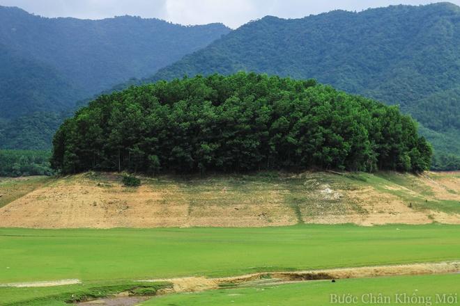 Ho nuoc can nhu 'thao nguyen Mong Co' o Da Nang hinh anh 7 Những đồi đất cao là nơi được trồng nhiều cây tràm dày đặc để khi mùa nước dâng tránh bị sạt lở.