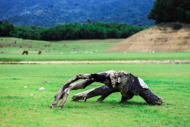 Ho nuoc can nhu 'thao nguyen Mong Co' o Da Nang hinh anh 9 Những cây gỗ nằm rải rác trên đồng cỏ xanh như một tác phẩm nghệ thuật sắp đặt.