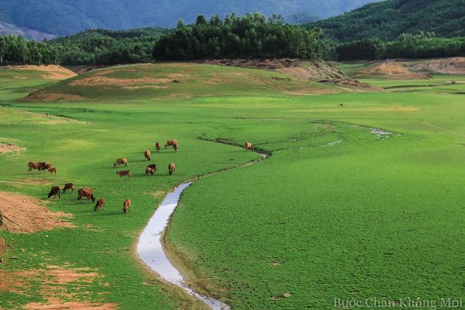 Ho nuoc can nhu 'thao nguyen Mong Co' o Da Nang hinh anh 4 Đàn bò tranh thủ gặm cỏ trên đường về khi chiều buông.