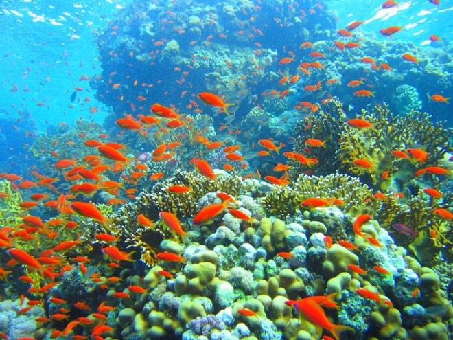 'Nhin du lich Viet ma dau long' hinh anh 3 Sinh vật biển bên rặng san hô ở Nha Trang. Ảnh: Vinadiving.com.vn.