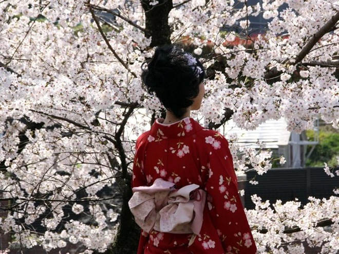 Top 15 thanh pho du khach nhat dinh phai den mot lan hinh anh 9 9. Kyoto, Nhật Bản: Ở thành phố Kyoto có hơn 1.600 đền thờ Phật và 400 miếu thờ Shinto. Đây là một trong những thành phố được bảo tồn tốt nhất của Nhật Bản. Ngày nay, du khách vẫn có thể nhìn thấy các geisha truyền thống di chuyển trên các đường phố.