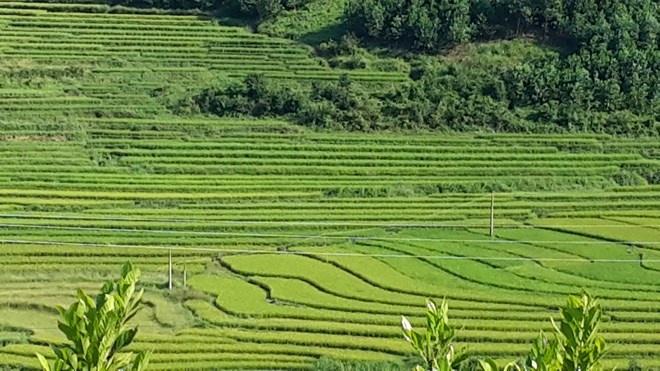 'Sa Pa o Quang Ninh' hinh anh 1