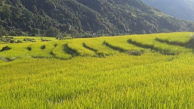 'Sa Pa o Quang Ninh' hinh anh 5