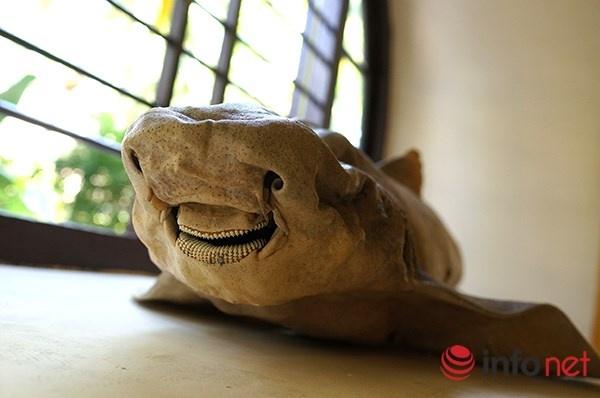 Vien Hai duong hoc Nha Trang niu chan khach du lich hinh anh 2 Đến đây du khách cũng sẽ được chiêm ngưỡng Bảo tàng sinh vật biển với trên 20.000 mẫu vật của hơn 4000 loại sinh vật biển và nước ngọt được sưu tầm, gìn giữ từ nhiều năm nay.