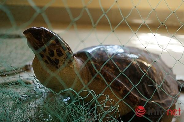 Vien Hai duong hoc Nha Trang niu chan khach du lich hinh anh 4 Một số hình ảnh về Viện Hải dương học Nha Trang, trong hình là mô hình rùa biển.