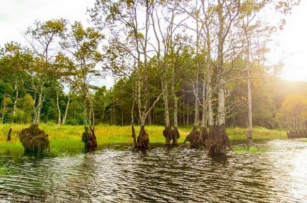 Ngam la phong Da Lat ruc ro chom dong hinh anh 2 Du khách sẽ không khỏi trầm trồ về tour du lịch hấp dẫn này. Để đến với khu rừng, du khách phải chèo thuyền cao su khoảng 1km. Hô Tuyền Lâm là hồ nước ngọt tự nhiên lớn nhất Đà Lạt, cách trung tâm thành phố 6km về phía Nam.