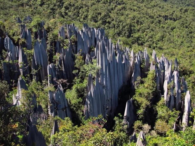 Kham pha ve bi an, huyen bi cua Vuon quoc gia Gunung Mulu hinh anh 2 Vườn quốc gia Gunung Mulu có tổng diện tích chừng 52.865 ha rừng nhiệt đới nguyên sinh, nơi có những con sông quanh năm chảy xiết và những dòng suối trong veo. Ảnh: Thousandwonders.