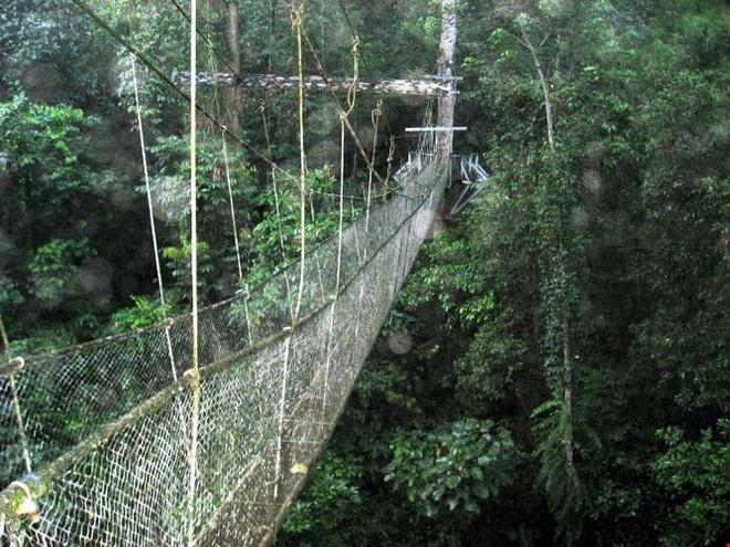 Kham pha ve bi an, huyen bi cua Vuon quoc gia Gunung Mulu hinh anh 6 Vườn quốc gia Gunung Mulu không chỉ nổi bật với những kỳ tích dưới lòng đất, mà còn mang vẻ đẹp miên man của núi rừng nhiệt đới nguyên sơ với hệ động thực vật rất phong phú và đa dạng. Ảnh: Thebaldgourmet.