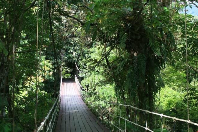 Kham pha ve bi an, huyen bi cua Vuon quoc gia Gunung Mulu hinh anh 8 Vườn quốc gia Gunung Mulu là nơi sinh trưởng của hơn 4.000 loài nấm, 1.700 loài rêu, 3.500 loại cây. Ảnh: Fatgirldoestheworld.
