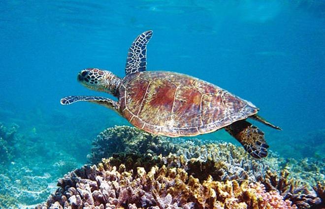 Kết quả hình ảnh cho Rạn san hô Ningaloo