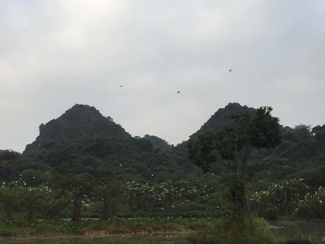Thung Nham - noi hang nghin canh chim tru ngu hinh anh 1