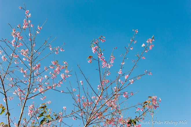 Nhung loai hoa khoe sac don xuan o Da Lat hinh anh 1
