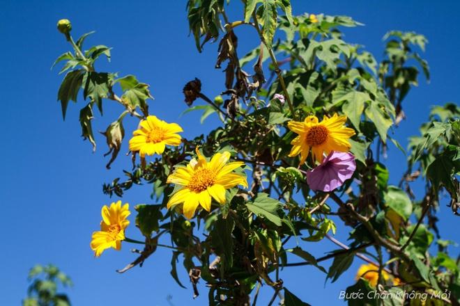 Nhung loai hoa khoe sac don xuan o Da Lat hinh anh 11
