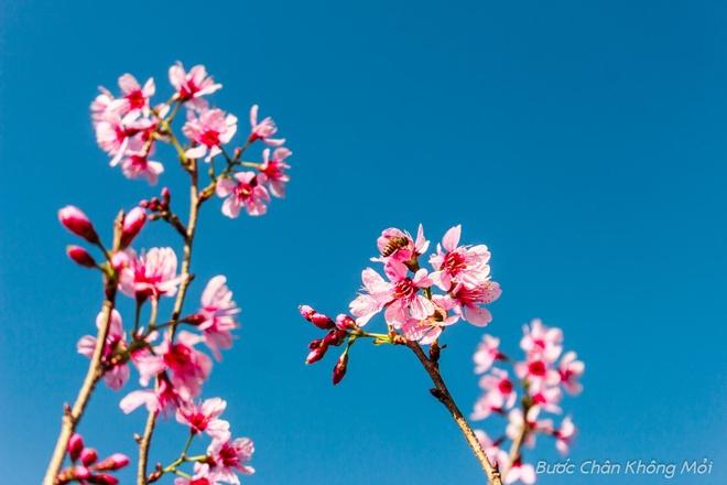 Nhung loai hoa khoe sac don xuan o Da Lat hinh anh