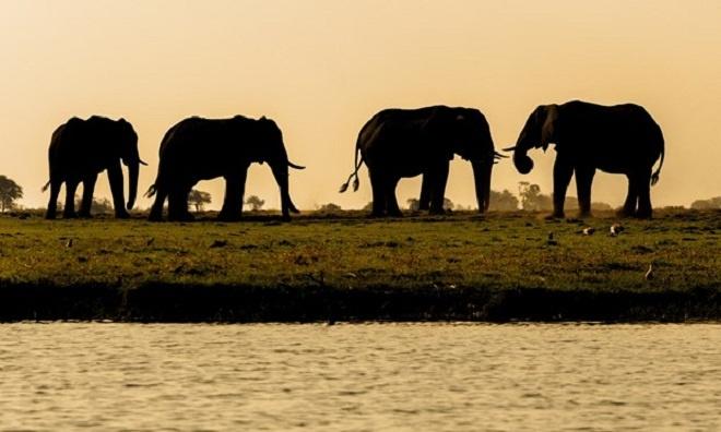 6 dieu khong nen bo qua khi den Botswana hinh anh 3