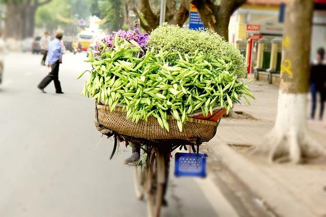 Hoa loa ken trang tinh khoi mang thang tu ve pho hinh anh 7