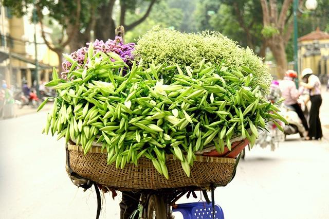 Hoa loa ken trang tinh khoi mang thang tu ve pho hinh anh 8