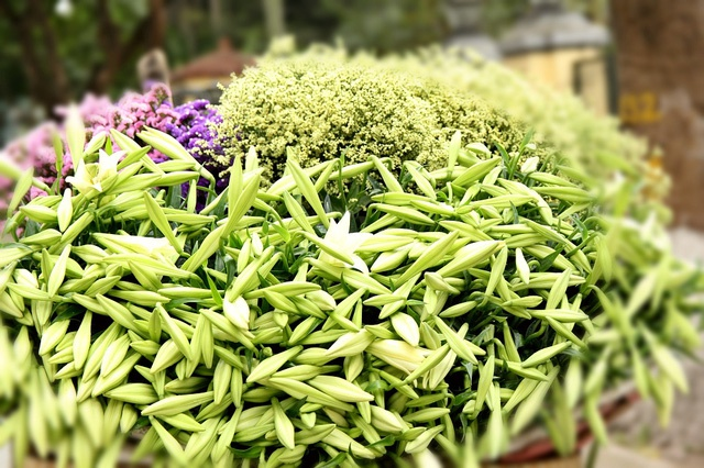 Hoa loa ken trang tinh khoi mang thang tu ve pho hinh anh 9