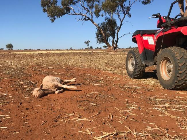 Thoi tiet khac nghiet huy diet 50% he sinh thai bien Australia hinh anh 2