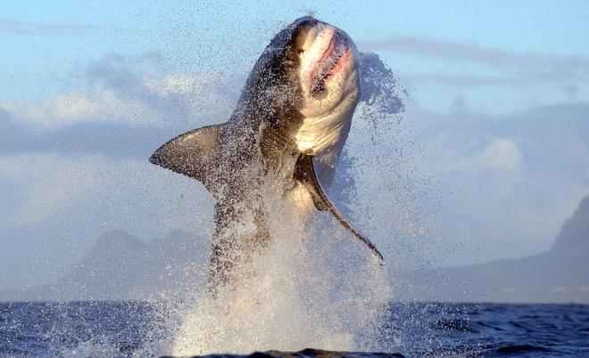 Cá mập trắng khổng lồ biến mất bí ẩn ngoài khơi Nam Phi