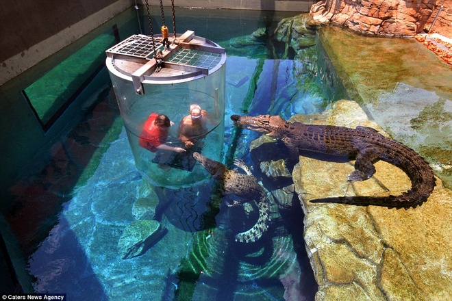 Hai du khách đùa giỡn với cá sấu.