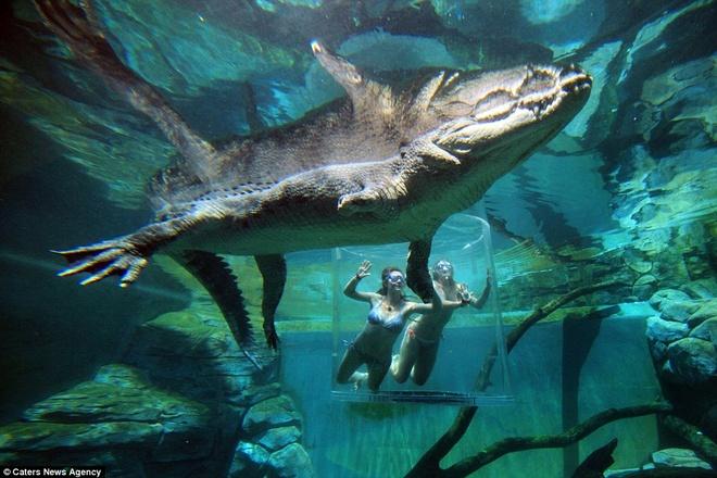 Du khách chỉ mặc đồ bơi và đeo kính bơi khi vào bể chứa.