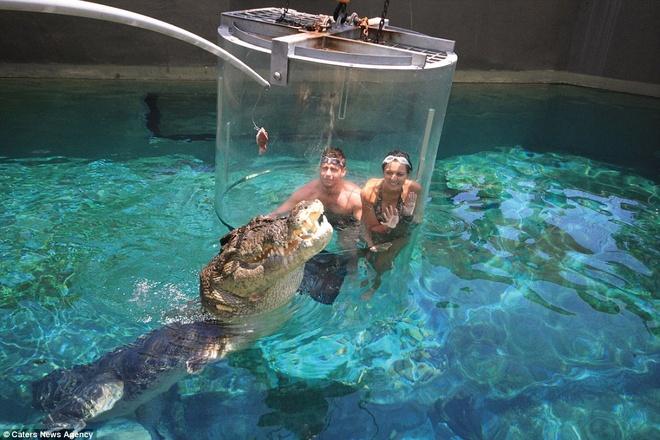 Chứng kiến cá sấu