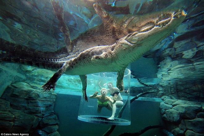 Mặt đối mặt với chú cá sấu khổng lồ là cảm giác chưa từng có.