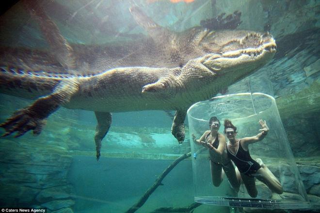 Tranh thủ tạo dáng cùng cá sấu.