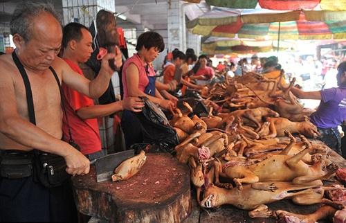 Nhung nuoc an thit cho, meo tren the gioi hinh anh 1 Trung Quốc: Thịt chó là món ẩm thực có lịch sử lâu đời. Tại xã Ngọc Lâm, tỉnh Quảng Tây, hàng năm có hẳn một lễ hội giết chó được tổ chức vào dịp Hạ chí với số lượng khoảng 5.000 đến 15.000 con chó bị giết trong các ngày lễ này. Ở các thành phố miền nam Trung Quốc như Quảng Châu, thịt chó rất phổ biến và được chế biến thành nhiều món như lẩu chó, canh thịt chó, hoặc bít tết chó. Người Trung Quốc cho rằng thịt chó rất bổ dưỡng, ăn thịt chó vào mùa hè sẽ giúp toát mồ hôi.