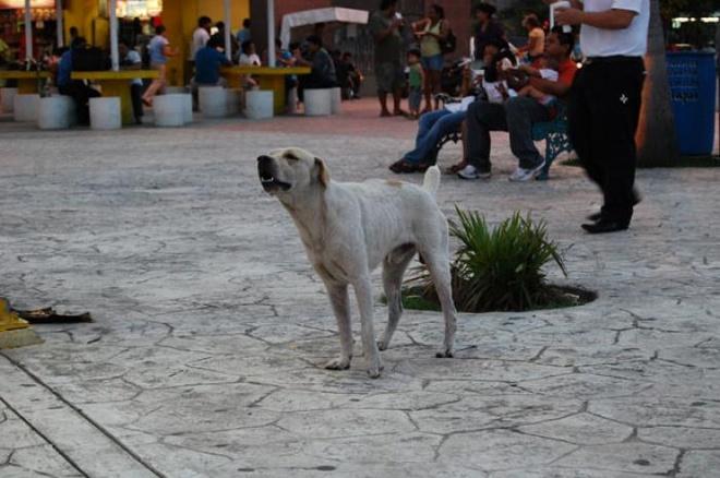 Nhung nuoc an thit cho, meo tren the gioi hinh anh 6 Mexico: Chó (được gọi là itzcuintlis) từ lâu được nuôi để làm thịt ở Mexico. Đã từ hàng trăm năm nay, ăn thịt chó là đặc trưng ẩm thực của nước này. Hiện nay, món ăn này vẫn phổ biến, đặc biệt ở những vùng nghèo.