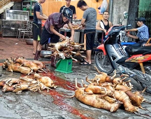 Nhung nuoc an thit cho, meo tren the gioi hinh anh 5 Việt Nam: Chó là món ăn phổ biến ở khắp nơi, được coi là món ăn giàu đạm và giải đen. Do vậy, nạn bắt trộm chó bán cho các quán nhậu hoành hành khắp nơi.