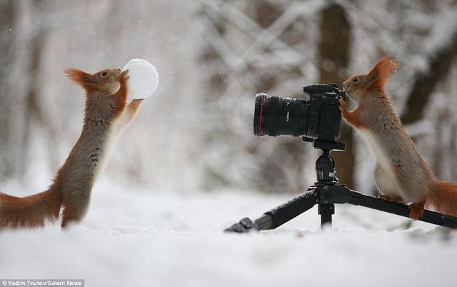 Soc choi tro nguoi mau - tho anh voi bong tuyet hinh anh 1 Nhiếp ảnh gia 30 tuổi Vadim Trunov đã chớp được khoảnh khắc rất thú vị này. Một chú sóc đang vươn cao người, cầm quả cầu tuyết trước máy ảnh, trong khi một chú sóc khác như đang chuẩn bị bấm máy.