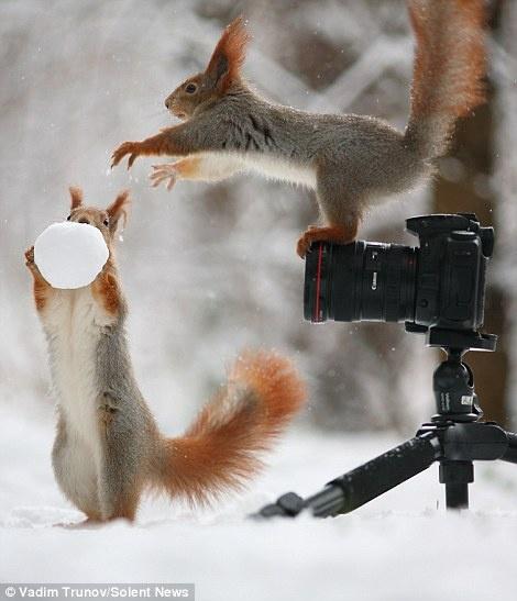 """Soc choi tro nguoi mau - tho anh voi bong tuyet hinh anh 2 Ngay sau đó, """"nhiếp ảnh gia"""" có vẻ không còn hứng thú gì với chiếc máy ảnh và đòi quả cầu tuyết của """"mẫu ảnh""""."""
