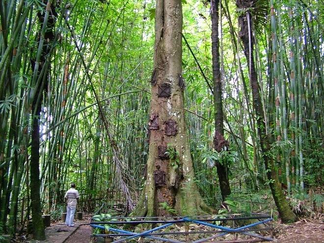 Theo Amusing Planet, vùng núi Tana Toraja, South Sulawesi ở Indonesia có một bộ lạc mang tên Toraja. Bộ lạc này tin vào thuyết vạn vật hữu linh, tức là mọi vật nuôi, cây cối, thậm chí cả vật vô tri vô giác đều có linh hồn. Đây cũng là một trong những nơi có nghi thức an táng kỳ lạ nhất trái đất.
