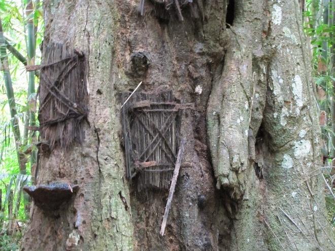 Trẻ em không được chôn trong hang hoặc treo trên vách đá mà được chôn trong một thân cây rỗng. Nếu đứa trẻ qua đời trước khi mọc răng, thì xác sẽ được bọc trong một tấm vài rồi đặt bên trong thân cây đang lớn. Lỗ hổng được bịt lại. Theo thời gian, cây lớn lên, lỗ hổng liền miệng và người ta tin rằng đứa trẻ đã được cây hấp thụ. Một cái cây có thể được dùng để chôn hàng chục em bé.