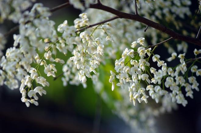 Nhung mua hoa dep nao long o Ha Noi hinh anh